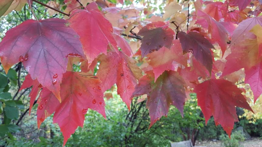 Sinnissippi-Tuath-Autumn